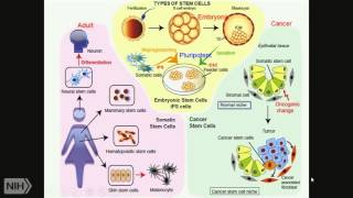TRACO 2015: Stem Cells - Epigenetics