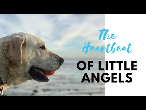 Little Angels Service Dogs – Changing Lives…One Dog At A Time