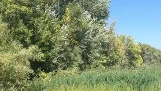 Природа и Волга