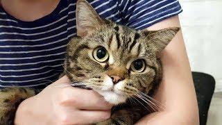 Ласковый кот сидит на руках и мурлычет/антистресс видео; Сat sits on lap and purrs/anti-stress video