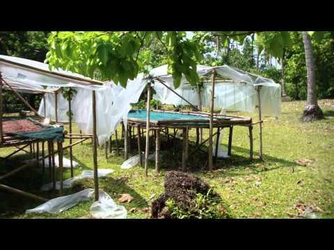 Cocoa drying facility on the Island of Malo Vanuatu www.remoteislandaid.org