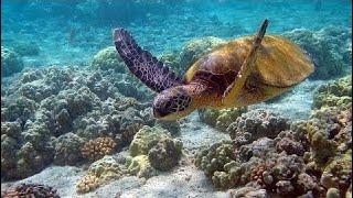 фильм документальный 2018 Подводный мир. Морские глубины. Кораллы. Документальный фильм.
