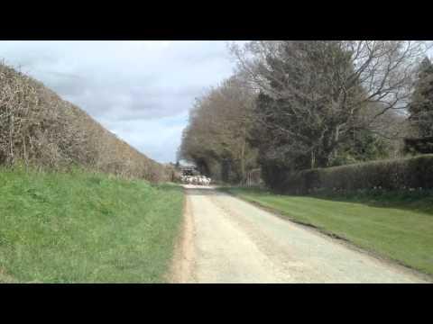 Darby lane Shropshire
