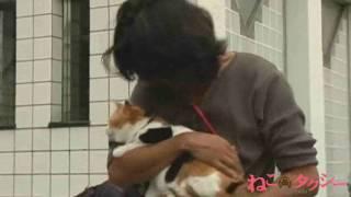 映画&ドラマ『ねこタクシー』主役猫・御子神(みこがみ)さんのオフシ...