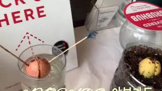 [미국LA일상]Avocado 아보카도 수경 재배,  분…