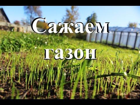 Сажаем газон. От сорняков до всходов.