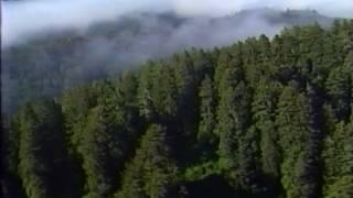 Cudowna planeta - SE01EP06 - Wielki las / Lektor PL