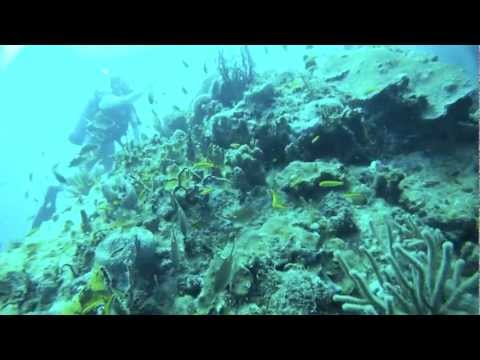 Coral Reef Biology in the BVI's