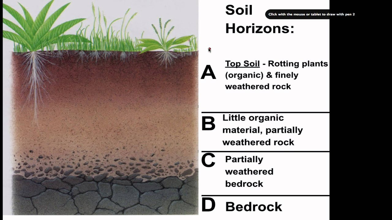 Soil profile diagram for children for What is soil