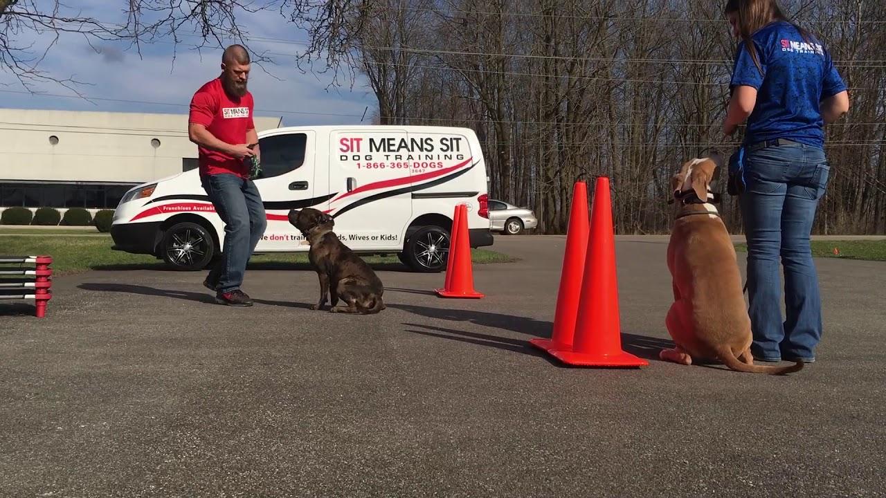 Dog Training Central Indiana • Kokomo Dog & Puppy Obedience