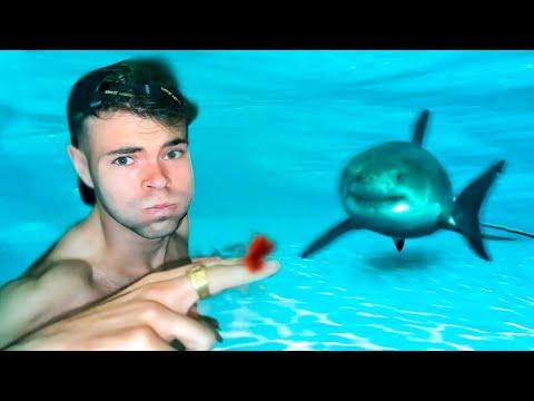 Download ¿Puede Oler Un Tiburón Una Gota De Sangre Debajo Del Agua?