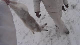 Охота на зайца 2018 - 2019 № 2