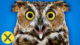 10 Curiosidades Animales