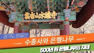 [경기도 명소 여행] 수종사와 500년 된 은행나무 T…