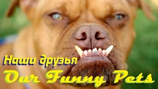 Our funny friends, best animal fails! // Друзья наши меньшие!