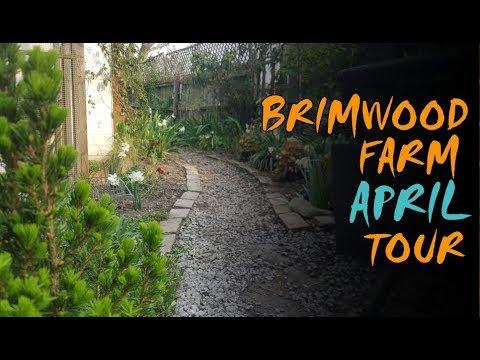 The CUTEST additions to Brimwood Farm (plus April tour)