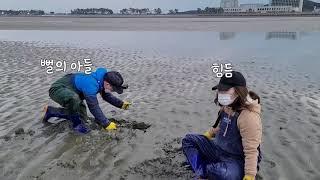 [왜사서고생해] 태안 진산리 갯벌 체험장에서 맛조개 잡…