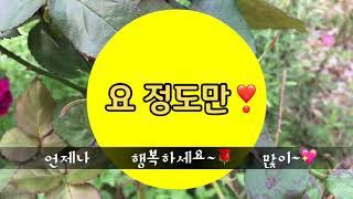 가을 장미 꽃 퍼레이드와, 이해인 수녀님의 '장…