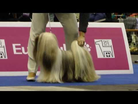 Euro Dog Show 2013 Lhasa Apso