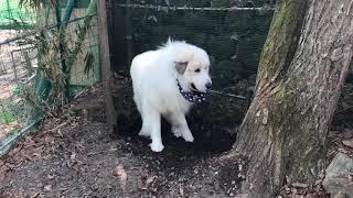 アランは穴掘りが苦手。穴を掘って180度回転して逆から掘るから元どおり...