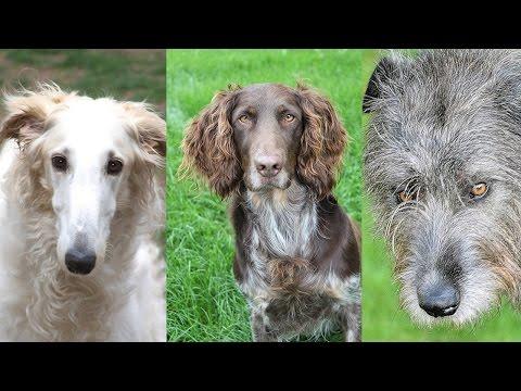 Охотничьи собаки: породы, разновидности, названия и фото