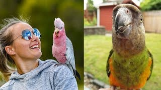 Funny Parrots Videos Compilation cute moment of the animals - Cutest Parrots  ▶ 2