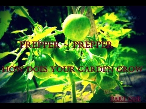 Prepper Prepper How Does Your Garden Grow? Part 1