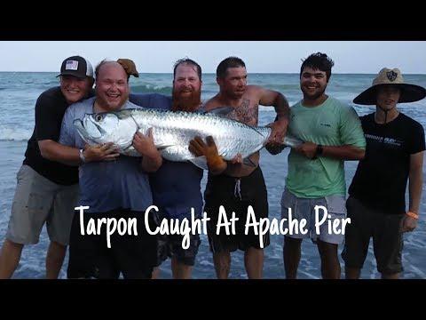 100 Pound Tarpon Caught On Apache Pier