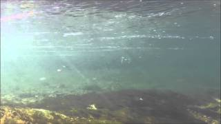 Rondane gytebekk / Forellen im Laichbach