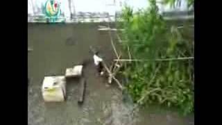 cyclone battles main myanmar city yangon may 03 2008 dvb