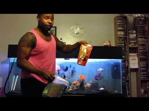 Cichlids - FISH FEEDING TIME 22/12/13