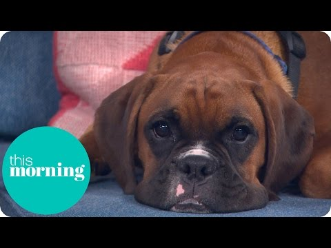 We Spent £70,000 To Clone Our Dead Dog | This Morning