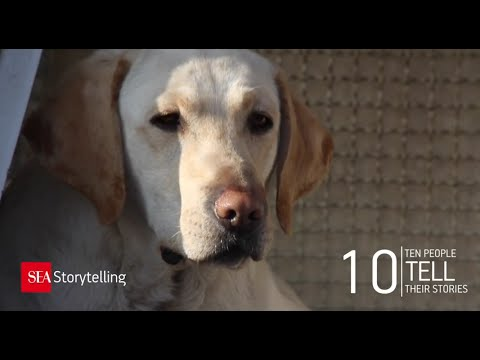 03 Kira Cane Poliziotto Police Dog At Malpensa Airport Youtube