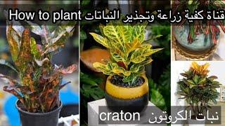 عشرة نباتات زينة منزلية سامة قد تكون في منزلك وانت لاتعرفها