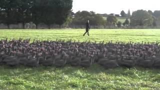 Découvrez les élevages des Fermiers de Loué