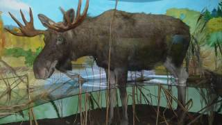 видео Белозерский областной краеведческий музей