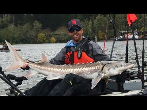 Kayak Fishing: White Sturgeon in Downtown Portland | #FieldTrips West Coast