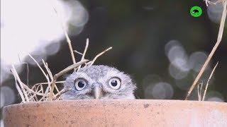OWLS ARE WEIRDOS  Funny Owls Compilation