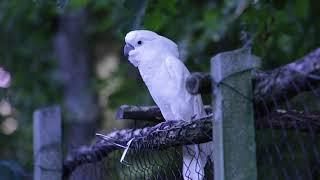 FUNNY ANIMALS FA   AGAIN FOR BIRDS