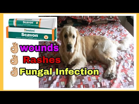 Trimming dogs hair in summers and applying Himalaya Scavon vet cream for rashes