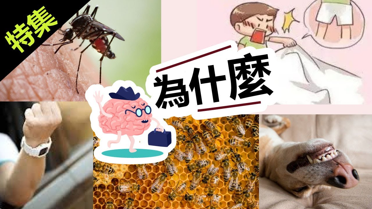 為什麼人們喜歡冷知識 | 為什麼貓能看見後方 | 為什麼狗喜歡曬太陽 | 為什麼豎中指被認為不雅 | 為什麼蚊子不怕被雨水砸死
