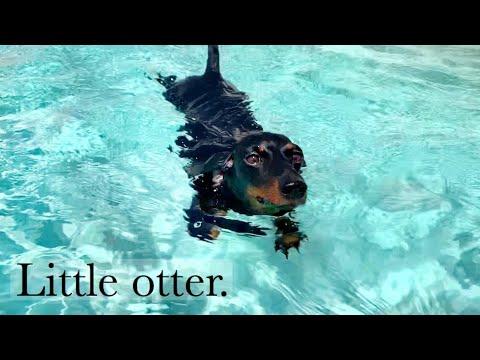 Loulous Travel Diary| 5 little otter.