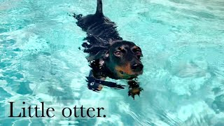 Loulou's Travel Diary| 5 little otter.