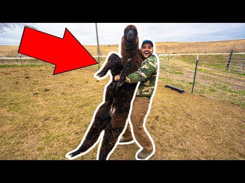 I Bought A GIANT ALPACA For My BACKYARD FARM!! (Exotic Auction)