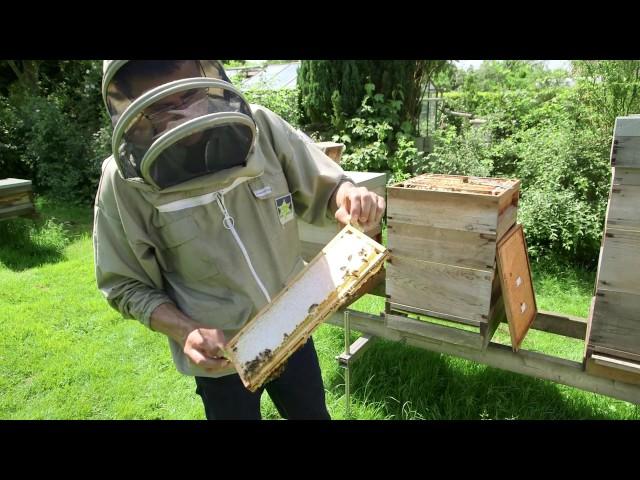 imker worden en je eigen honing oogsten?