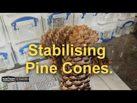Stabilising pine cones