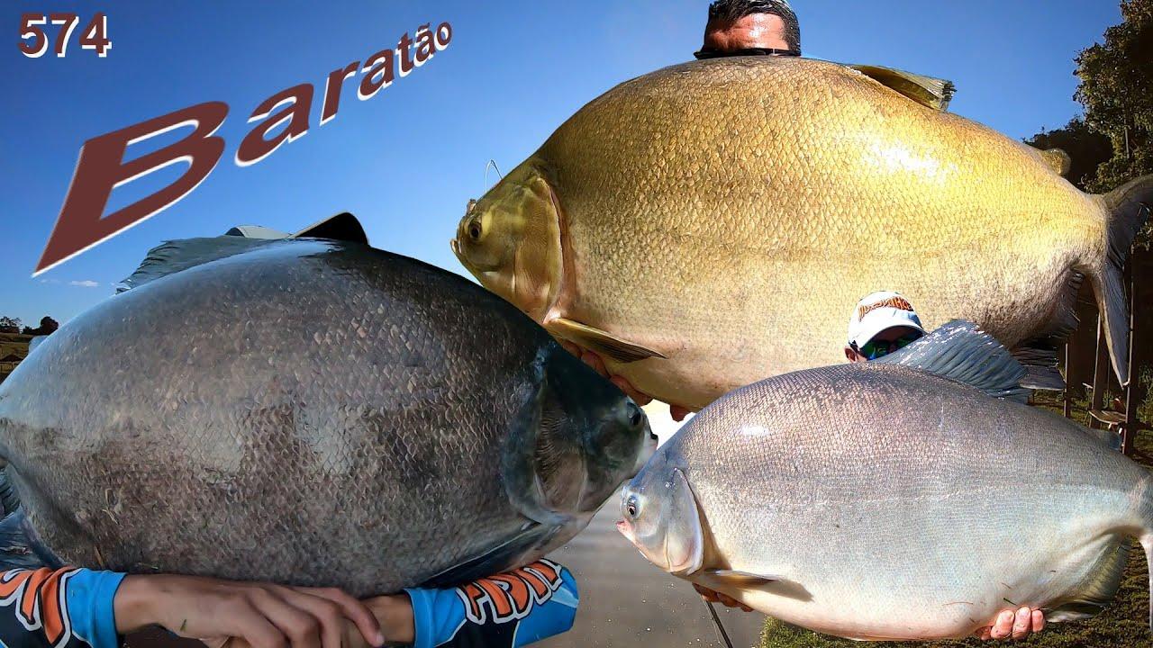 Baratão - Pescaria difícil na superfície mas com grandes exemplares fisgados - Programa 574