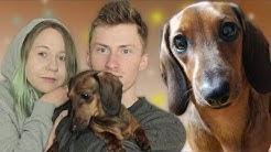 Millainen koira on Milli?