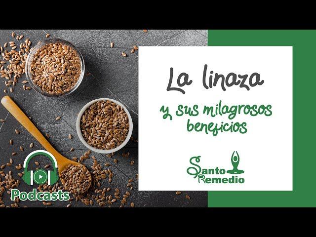 La linaza y sus milagrosos beneficios - Santo Remedio Panamá.