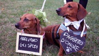 Go Pro sul cane il del tuo matrimonio wedding dog sitter gopro fetch